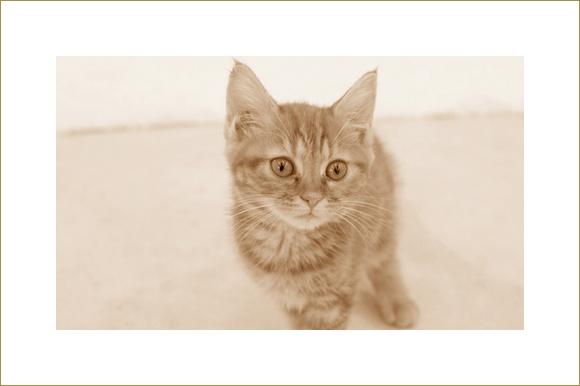s_cat2
