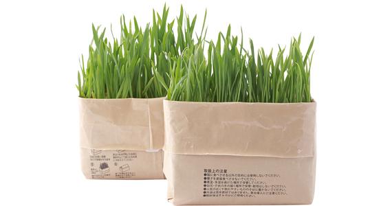猫草栽培セット|なぜか惹かれる無印良品のニッチアイテム