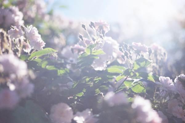 原美術館にて「蜷川実花 うつくしい日々」急遽開催決定!